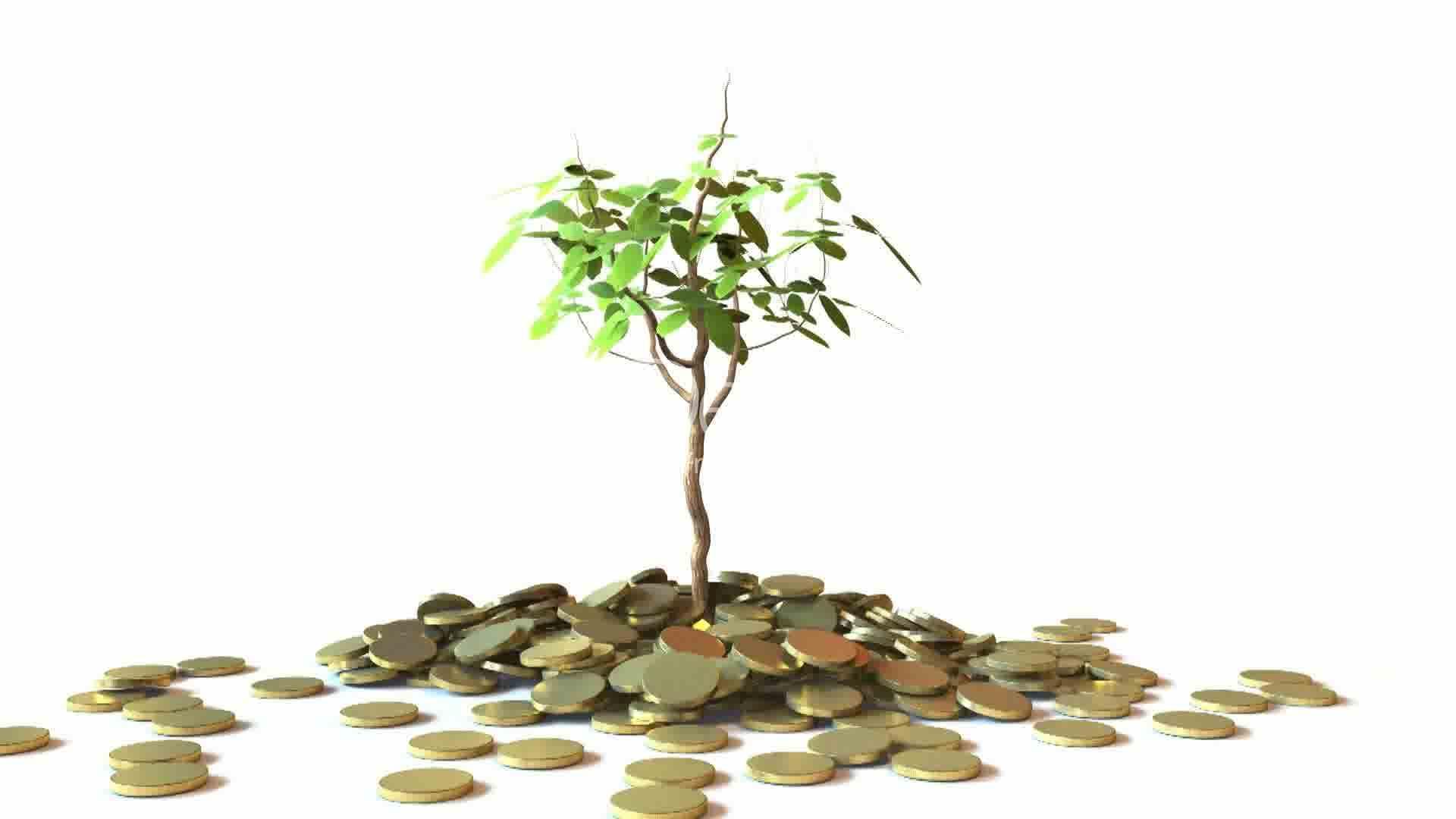 arvore dinheiro online